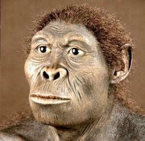 homo sapiens habilis_op_800x776